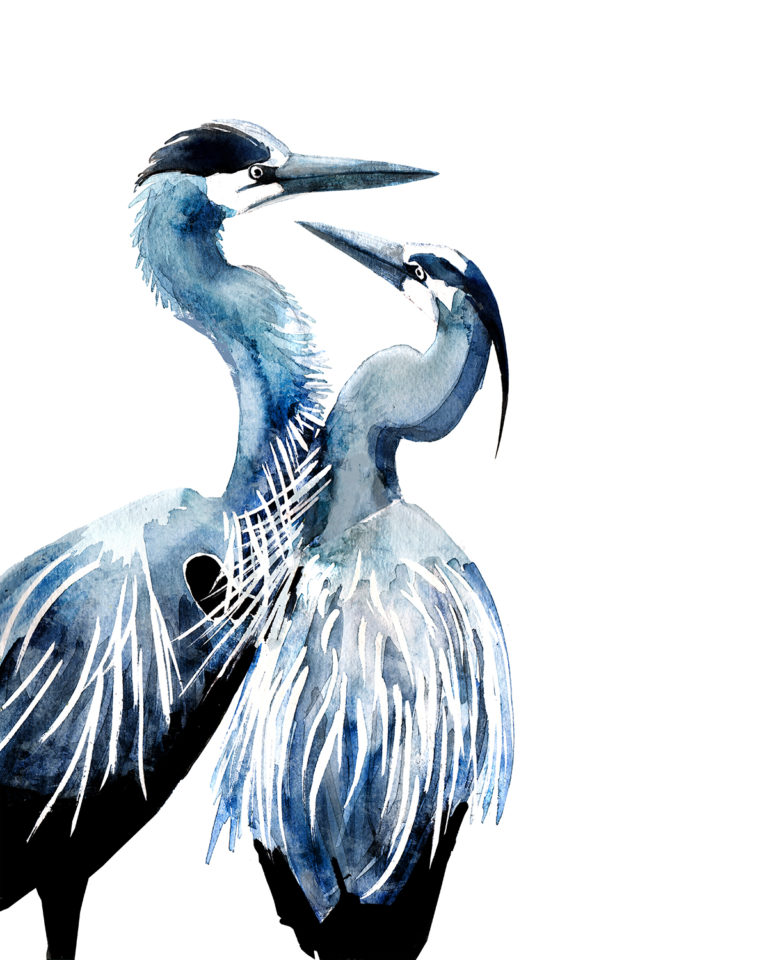 Blue herons in watercolor