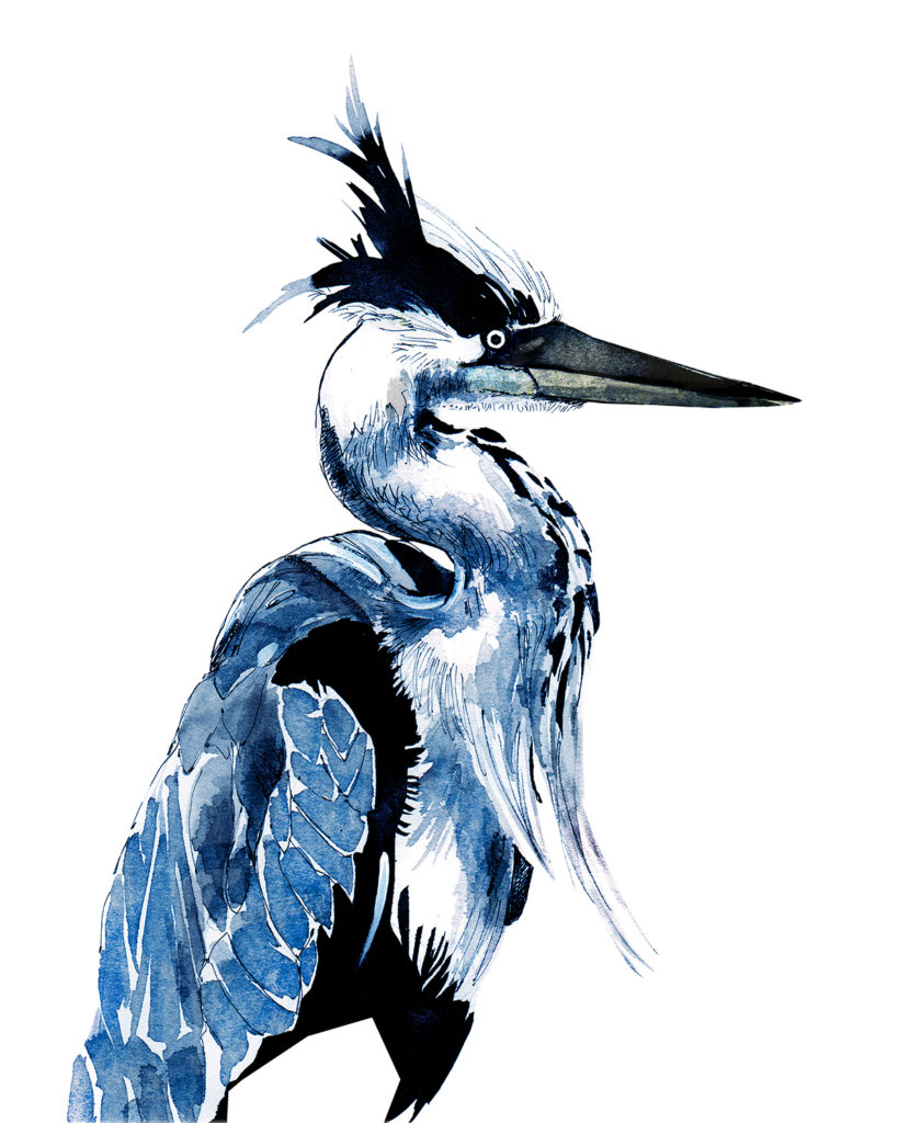 blue heron painting in ink, wildlife and animal painting by Crystal Smith