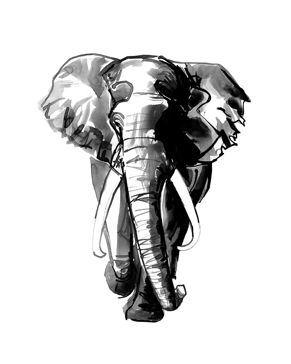 ink black and white painting of african elephant by wildlife artist Crystal Smith