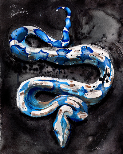 ink and watercolor painting of snake by wildlife artist Crystal Smith in west coast Canada