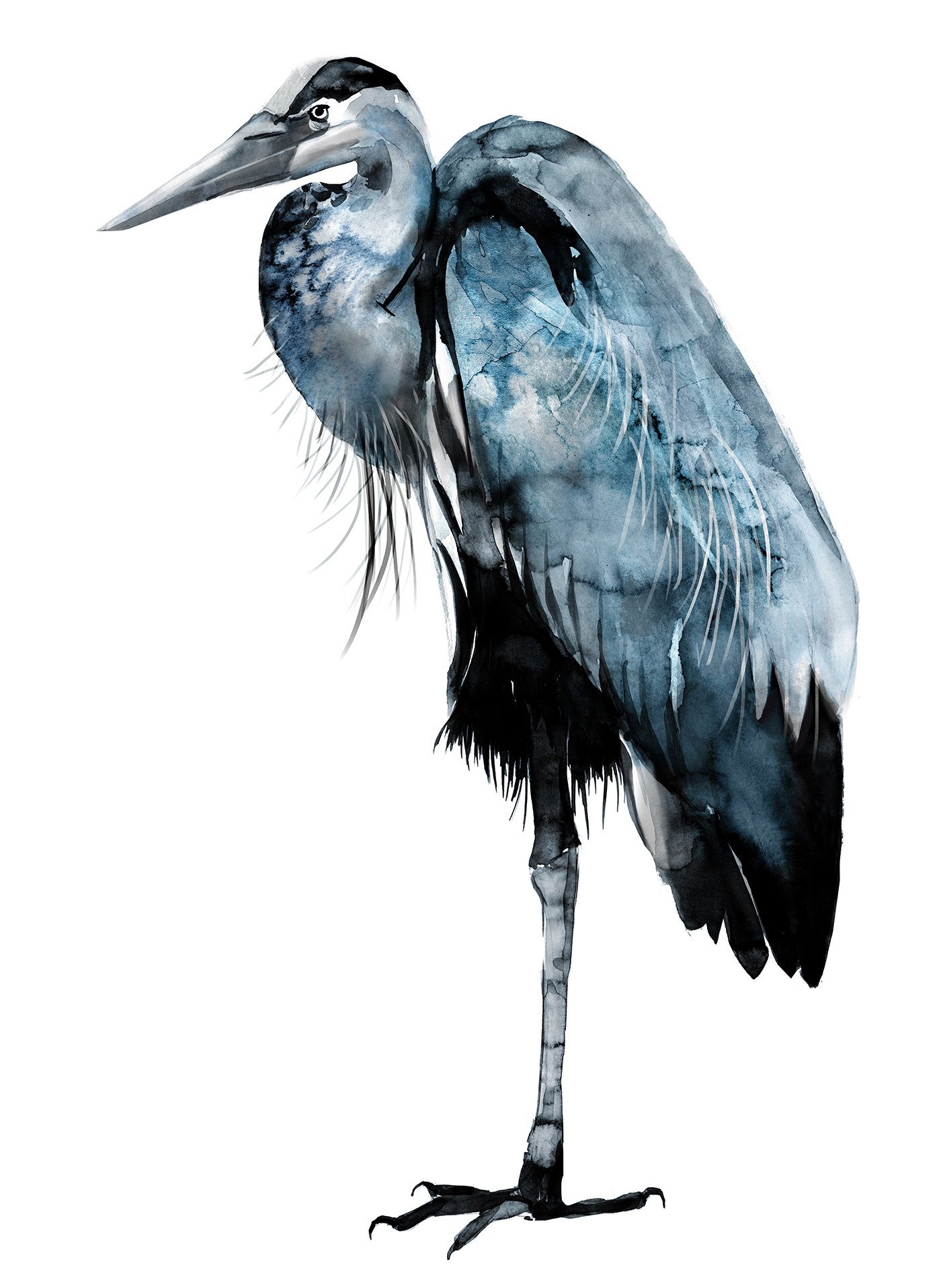 watercolor and ink painting of blue heron by wildlife artist Crystal Smith from the west coast BC Canada