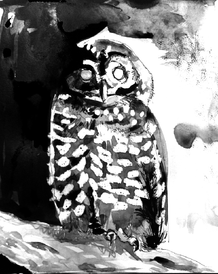 ink black and white painting of spotted owl by wildlife artist Crystal Smith