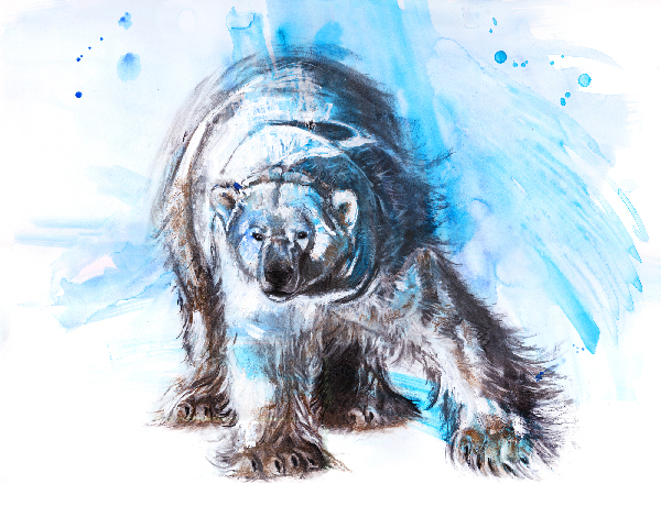 acrylic, charcoal and watercolor painting of polar bear by wildlife artist Crystal Smith in BC Canada