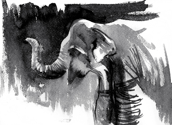 ink black and white painting of Asian elephant by wildlife artist Crystal Smith